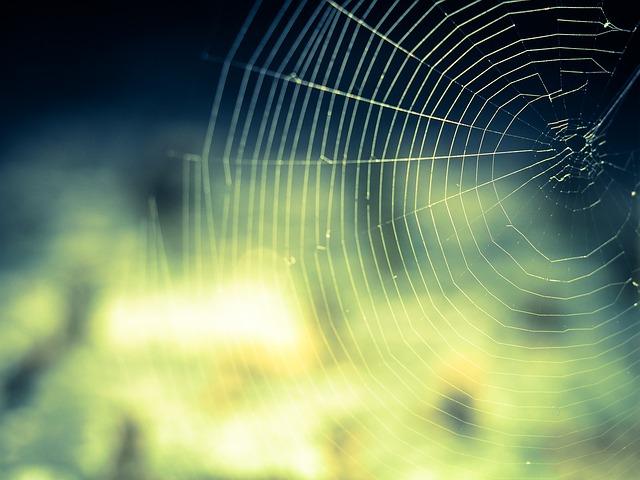 הדברת עכבישים – למה חשוב לעשות?