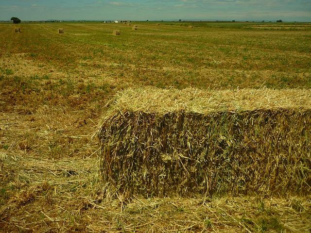 פיצול נחלה חקלאית