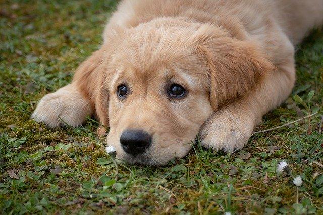 באיזה גיל ניתן להוציא את הכלב לטיול בפעם הראשונה?