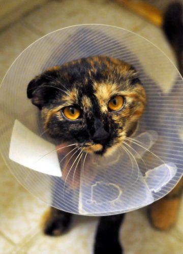 איך וטרינר חירום בשרון הציל לי את החתולה