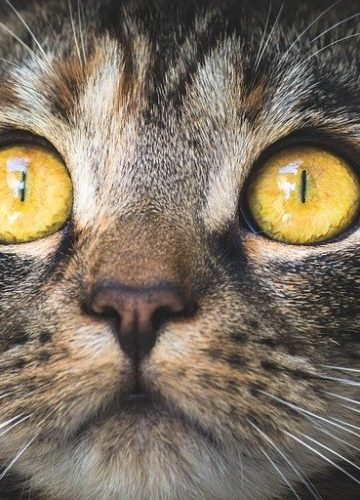 תתפלאו לגלות כמה עולים חיסונים לחתולים