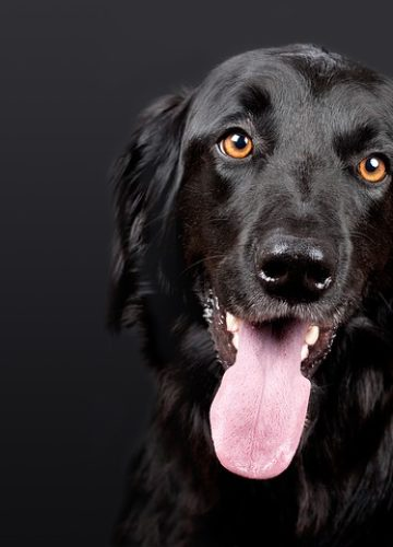 מה אפשר לעשות נגד ריח רע מפה של הכלב שלך