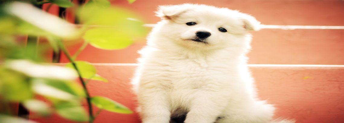אוכל לכלבים: חלבון מוסיף המון