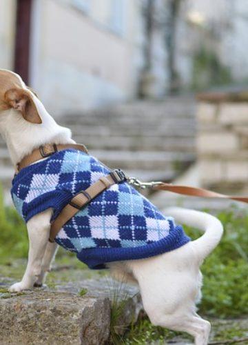 ציוד לבעלי חיים – כיצד קונים בצורה נכונה?