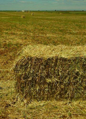 איך לפצל נחלה חקלאית?