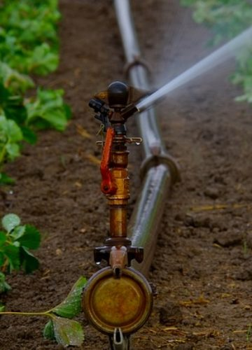 איך כדאי להשקות את הגינה בחיי היום יום?